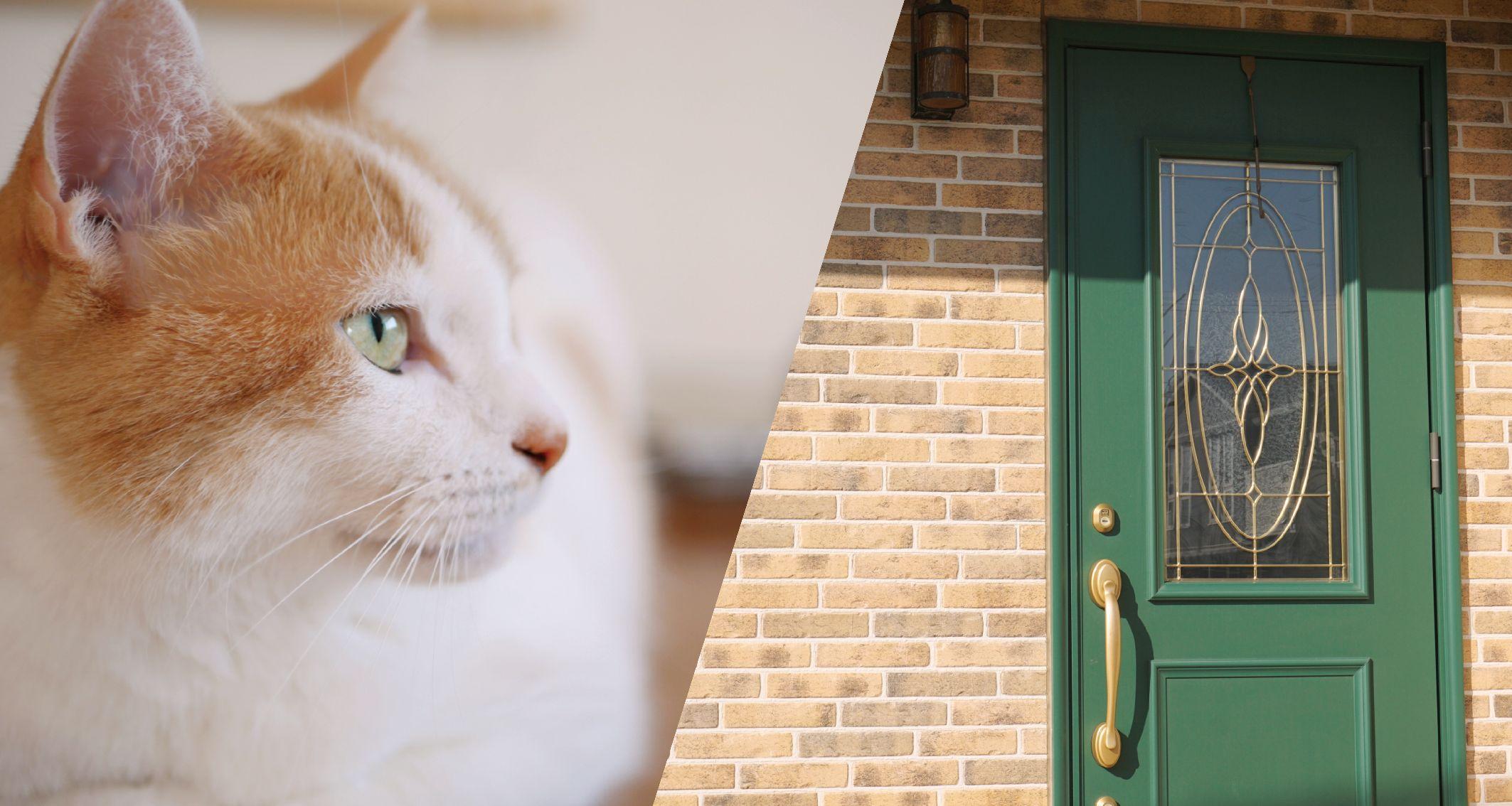 ねこと玄関ドアの写真